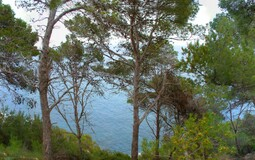 Plot in Canyamel - View to quiet water through trees